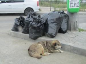 Romania 23.6-3.7.2011 298_0