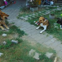 07/2015 | Costel, Maca ja Mirella