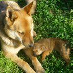 12/2012   Costel ja vauva