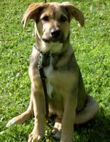 Viivi, uudelta nimeltään Stella, omassa kodissaan 1.6.2006