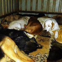 Kontin sisällä on tiivis tunnelma. Kaikille tarhan koirista ei kuitenkaan riitä suojakseen edes kunnollista koppi -tai parakkipaikkaa.