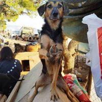 Seka on yksi tarhan leishmaniaa sairastavista koirista.